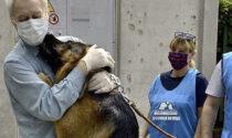 E' la giornata internazionale del cane: frasi, aforismi e curiosità su Fido
