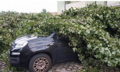 Musile di Piave: un albero sfonda la macchina di un ignaro cittadino ma il Comune non paga…