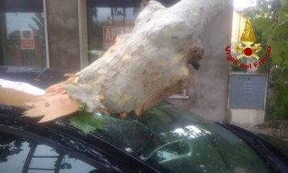 Maltempo nel Veneziano, albero precipita su un'auto a Chioggia: danneggiato anche a un negozio! – FOTO