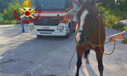 Fiume Piave, cavallo salvato dai Vigili del fuoco a Fossalta – VIDEO