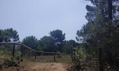 Una lettera alla Commissione europea per salvare le dune degli Alberoni