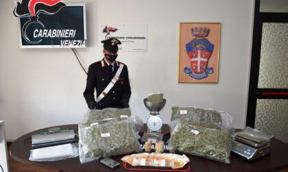 Professione: agente di commercio... di marijuana. 22enne di San Donà di Piave beccato con 6 chili d'erba