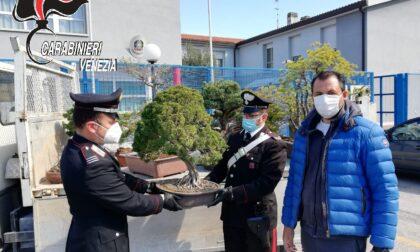 """Ritrovati i preziosi bonsai rubati dal vivaio di Luca: ora tornano """"a casa"""""""