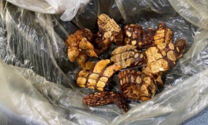 Controlli in aeroporto, nelle valige di un viaggiatore c'erano pezzi di carne di coccodrillo