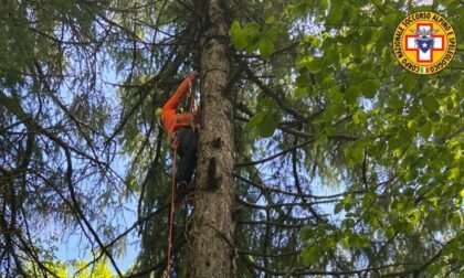 Precipita col parapendio e chiama i soccorsi dall'albero: 48enne veneziano salvato