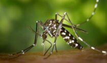Uno studio rivela: zanzare e malaria proteggerebbero dal Covid