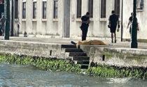 Un cadavere riaffiora dalle acque dell'isola della Giudecca: mistero sull'identità