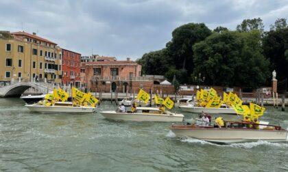 Città e campagne invase dai cinghiali: flash mob a Venezia
