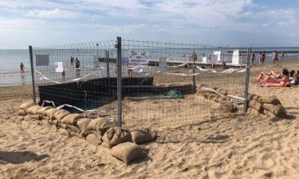 Nido di tartarughe sulla spiaggia di Jesolo, non era mai successo prima