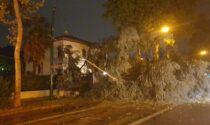 Nubifragio in provincia di Venezia: alberi abbattuti, blackout sparsi e vento a 180 km/h