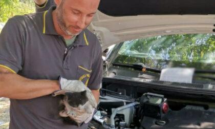 Il miagolio attira l'attenzione di una bimba, le immagini del gattino incastrato nel parafango di un'auto