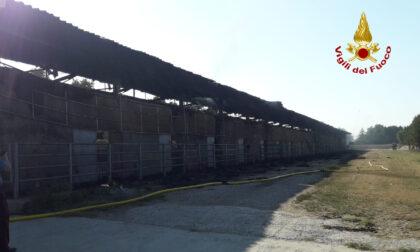 Incendio in un'azienda agricola, le immagini del rogo che ha coinvolto 220 bovini