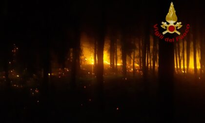"""Incendio appiccato nella pineta di Bibione, Caner: """"Servono pene esemplari"""""""