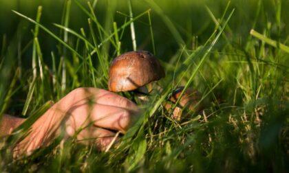 Una giornata a cercar funghi si trasforma in un incubo per un veneziano