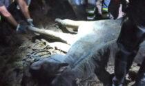 Cavallo impantanato a Cavallino: le emozionanti immagini del salvataggio
