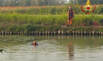 Cade dalla barca e viene inghiottito nel Naviglio del Brenta: trovato morto mezz'ora dopo